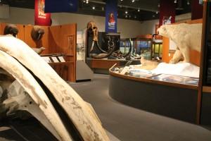 Museum of the North, University of Alaska